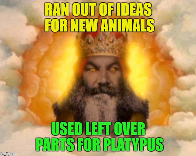 RAN OUT OF IDEAS FOR NEW ANIMALS USED LEFT OVER PARTS FOR PLATYPUS | made w/ Imgflip meme maker