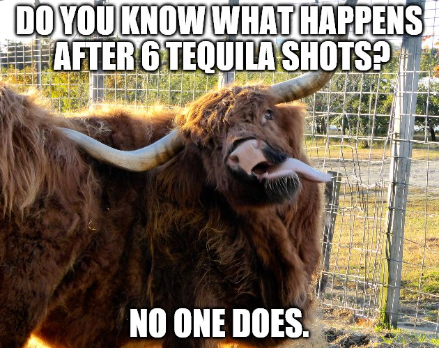 Huge Bull With Tongue Sticking Out. Tequila Bull.  | DO YOU KNOW WHAT HAPPENS AFTER 6 TEQUILA SHOTS? NO ONE DOES. | image tagged in bull scratch,bull,tequila,tongue | made w/ Imgflip meme maker