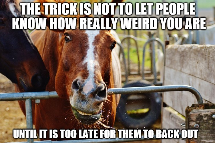Horse in stall talking about being a weird person | THE TRICK IS NOT TO LET PEOPLE KNOW HOW REALLY WEIRD YOU ARE UNTIL IT IS TOO LATE FOR THEM TO BACK OUT | image tagged in funny memes,horse,horses,weird,funny animals | made w/ Imgflip meme maker