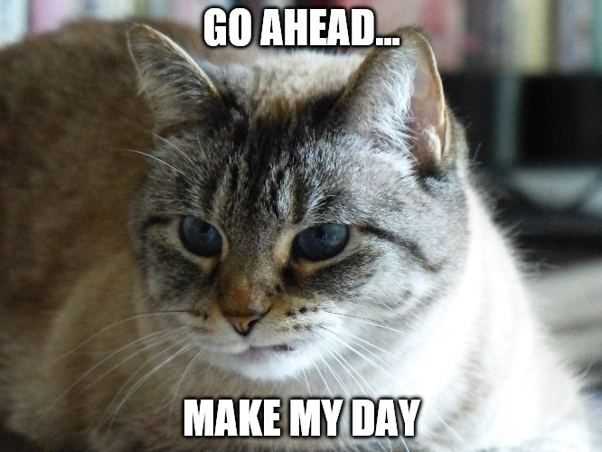 Go Ahead. Make My Day |  GO AHEAD... MAKE MY DAY | image tagged in funny,cat,funny memes,funny cats,funny cat memes | made w/ Imgflip meme maker