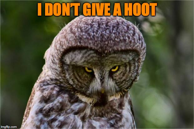 I DON'T GIVE A HOOT | made w/ Imgflip meme maker