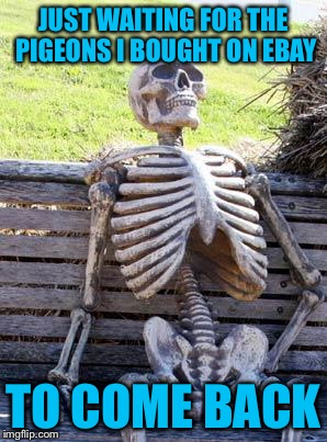 Waiting Skeleton Meme | JUST WAITING FOR THE PIGEONS I BOUGHT ON EBAY TO COME BACK | image tagged in memes,waiting skeleton | made w/ Imgflip meme maker