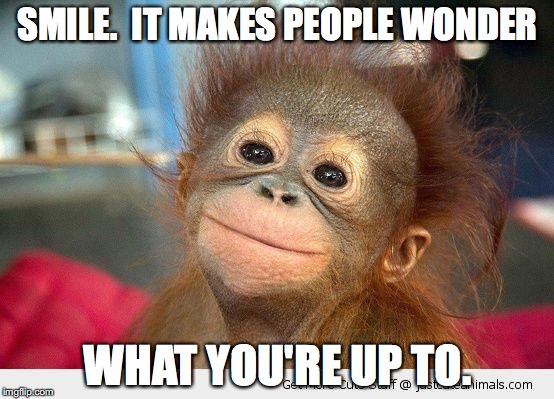 Cute Monkey |  SMILE.  IT MAKES PEOPLE WONDER; WHAT YOU'RE UP TO. | image tagged in cute monkey | made w/ Imgflip meme maker