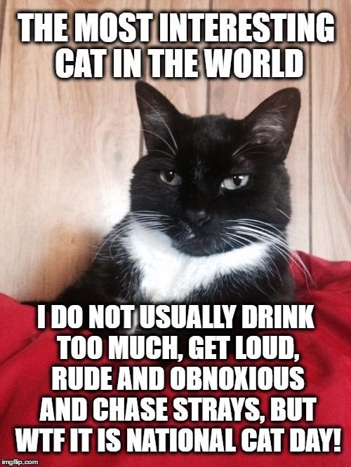 1d7c0s funny cat memes imgflip