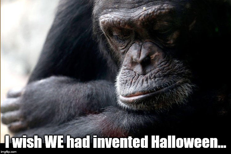 Every thing would have been different . . . | I wish WE had invented Halloween... | image tagged in koko,invented,halloween,happy halloween,ape,great ape | made w/ Imgflip meme maker