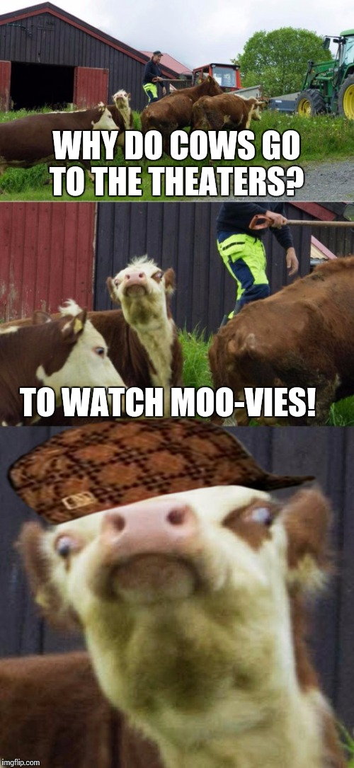 Bad pun cow  | WHY DO COWS GO TO THE THEATERS? TO WATCH MOO-VIES! | image tagged in bad pun cow,scumbag | made w/ Imgflip meme maker