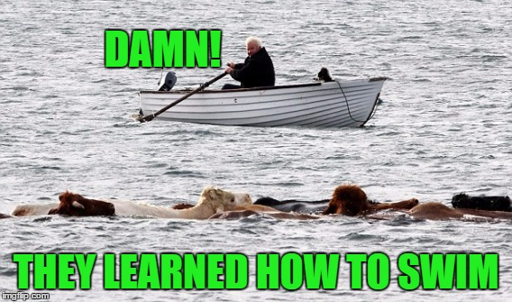 DAMN! THEY LEARNED HOW TO SWIM | made w/ Imgflip meme maker