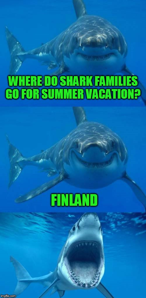 Bad Shark Pun  | WHERE DO SHARK FAMILIES GO FOR SUMMER VACATION? FINLAND | image tagged in bad shark pun | made w/ Imgflip meme maker