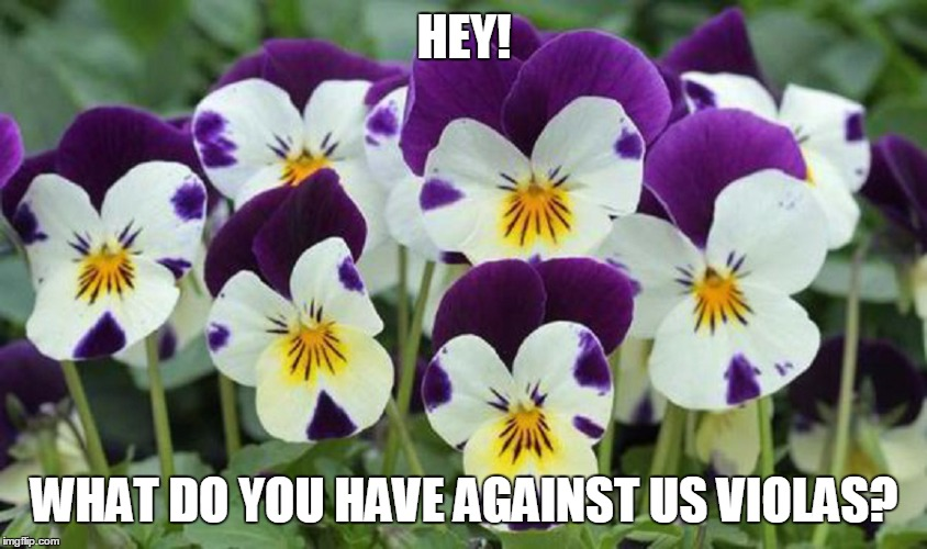 HEY! WHAT DO YOU HAVE AGAINST US VIOLAS? | made w/ Imgflip meme maker