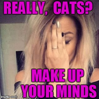 face palm | REALLY,  CATS? MAKE UP YOUR MINDS | image tagged in face palm | made w/ Imgflip meme maker