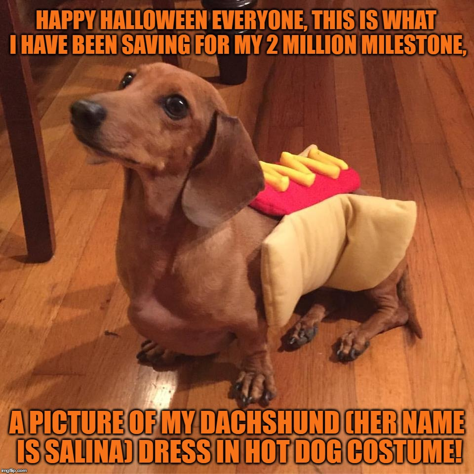 Happy Halloween Everyone, Hope You Are Safe And Extremely Spooky Tonight. | HAPPY HALLOWEEN EVERYONE, THIS IS WHAT I HAVE BEEN SAVING FOR MY 2 MILLION MILESTONE, A PICTURE OF MY DACHSHUND (HER NAME IS SALINA) DRESS I | image tagged in memes,halloween,dachshund,hot dog,funny,dogs | made w/ Imgflip meme maker