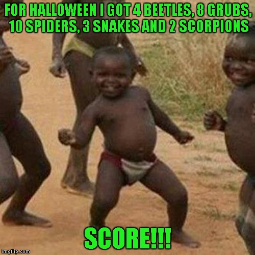 Third World Success Kid |  FOR HALLOWEEN I GOT 4 BEETLES, 8 GRUBS, 10 SPIDERS, 3 SNAKES AND 2 SCORPIONS; SCORE!!! | image tagged in memes,third world success kid,halloween,funny | made w/ Imgflip meme maker