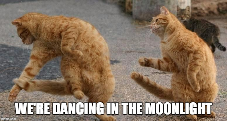 WE'RE DANCING IN THE MOONLIGHT | made w/ Imgflip meme maker