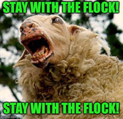 SHEEPLE | STAY WITH THE FLOCK! STAY WITH THE FLOCK! | image tagged in stupid sheep | made w/ Imgflip meme maker