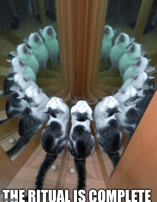 THE RITUAL IS COMPLETE | image tagged in memes,cats,cute,i am seriously bored | made w/ Imgflip meme maker