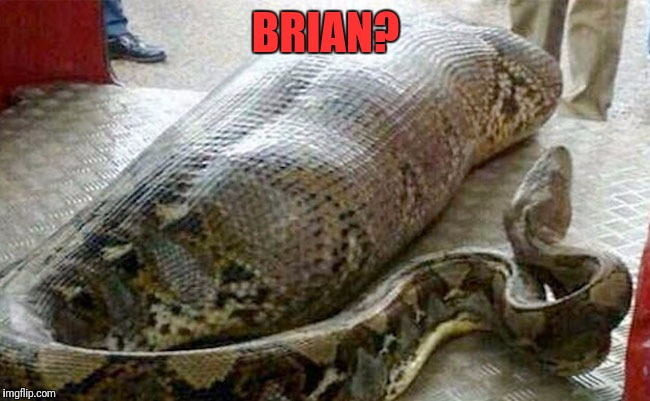 Bad Luck Brian | BRIAN? | image tagged in memees,bad luck brian,snakes | made w/ Imgflip meme maker