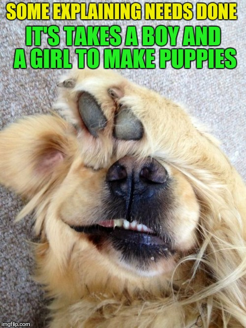 SOME EXPLAINING NEEDS DONE IT'S TAKES A BOY AND A GIRL TO MAKE PUPPIES | made w/ Imgflip meme maker