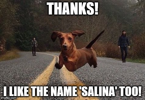 Dachshunds can fly! | THANKS! I LIKE THE NAME 'SALINA' TOO! | image tagged in dachshunds can fly | made w/ Imgflip meme maker