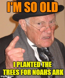 Back In My Day Meme | I'M SO OLD I PLANTED THE TREES FOR NOAHS ARK | image tagged in memes,back in my day | made w/ Imgflip meme maker