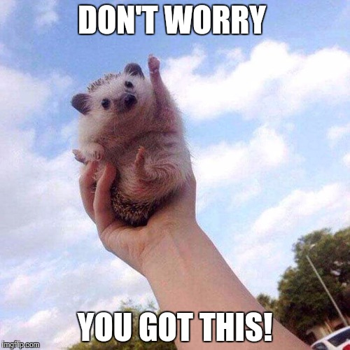 Motivational Hedgehog is Motivational Meme Generator - Imgflip
