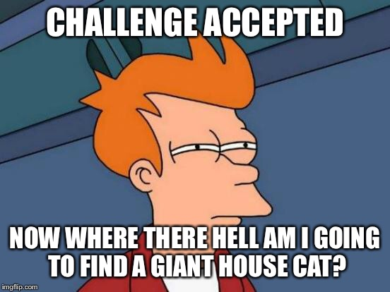 Futurama Fry Meme | CHALLENGE ACCEPTED NOW WHERE THERE HELL AM I GOING TO FIND A GIANT HOUSE CAT? | image tagged in memes,futurama fry | made w/ Imgflip meme maker