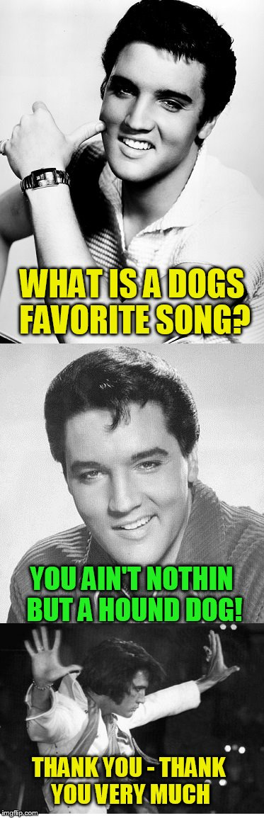 Bad Pun Elvis (A Hokeewolf Template)  | WHAT IS A DOGS FAVORITE SONG? YOU AIN'T NOTHIN BUT A HOUND DOG! THANK YOU - THANK YOU VERY MUCH | image tagged in elvis presley,jokes,puns,memes,laughs,hokeewolf | made w/ Imgflip meme maker