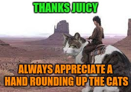 THANKS JUICY ALWAYS APPRECIATE A HAND ROUNDING UP THE CATS | made w/ Imgflip meme maker