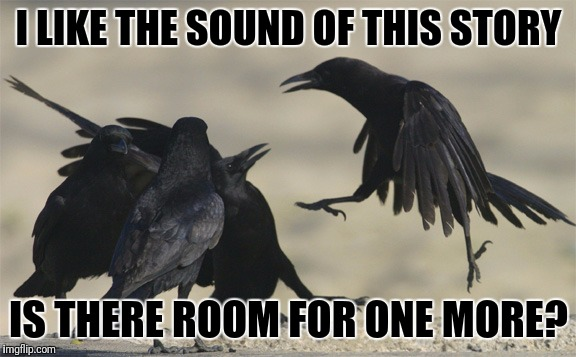 Murder she wrote | I LIKE THE SOUND OF THIS STORY IS THERE ROOM FOR ONE MORE? | image tagged in memes,murder of crows | made w/ Imgflip meme maker