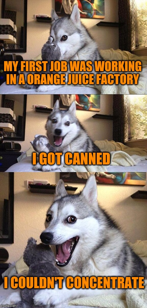 Bad Pun Dog Meme | MY FIRST JOB WAS WORKING IN A ORANGE JUICE FACTORY I GOT CANNED I COULDN'T CONCENTRATE | image tagged in memes,bad pun dog | made w/ Imgflip meme maker