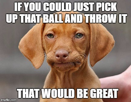 Disappointed Puppy | IF YOU COULD JUST PICK UP THAT BALL AND THROW IT THAT WOULD BE GREAT | image tagged in disappointed puppy | made w/ Imgflip meme maker