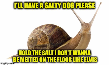 I'LL HAVE A SALTY DOG PLEASE HOLD THE SALT I DON'T WANNA BE MELTED ON THE FLOOR LIKE ELVIS | made w/ Imgflip meme maker