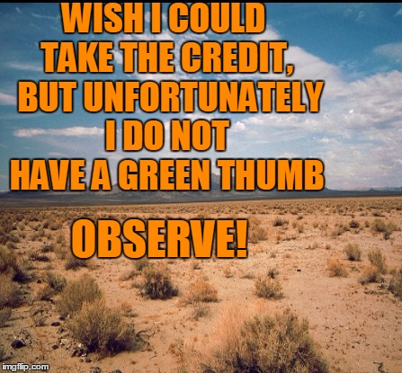 WISH I COULD TAKE THE CREDIT,  BUT UNFORTUNATELY I DO NOT HAVE A GREEN THUMB OBSERVE! | made w/ Imgflip meme maker