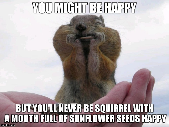 We must hold on to these moments... | YOU MIGHT BE HAPPY BUT YOU'LL NEVER BE SQUIRREL WITH A MOUTH FULL OF SUNFLOWER SEEDS HAPPY | image tagged in squirrel,happy squirrel,squirrel nuts | made w/ Imgflip meme maker