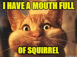 I HAVE A MOUTH FULL OF SQUIRREL | made w/ Imgflip meme maker