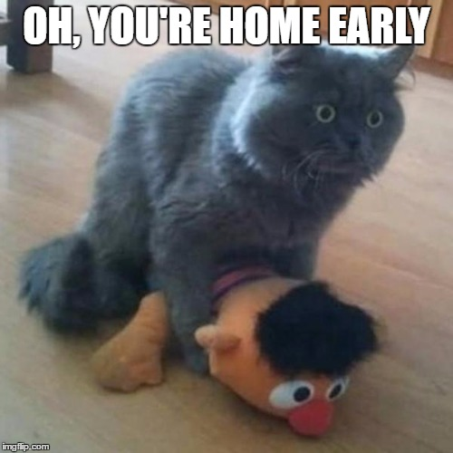 BUSTED!!!!! | OH, YOU'RE HOME EARLY | image tagged in cats,memes,meme,funny memes,funny meme | made w/ Imgflip meme maker