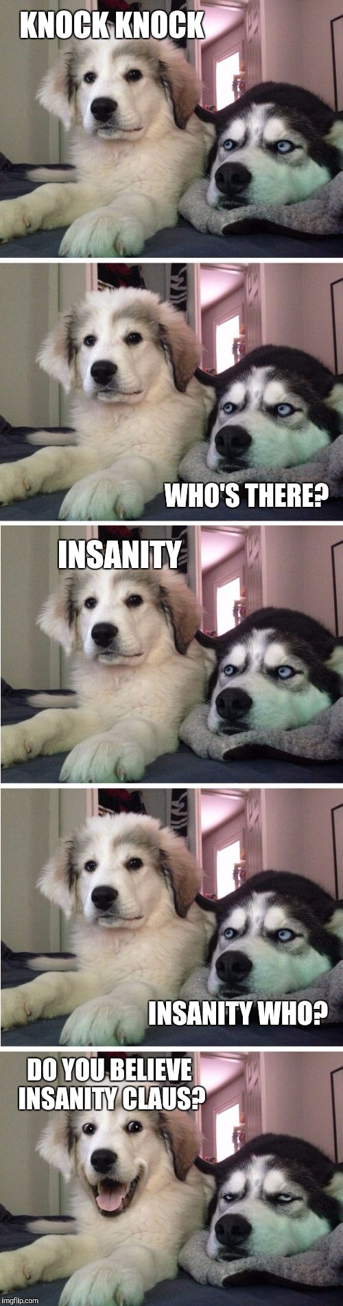Knock Knock Dogs | KNOCK KNOCK DO YOU BELIEVE INSANITY CLAUS? WHO'S THERE? INSANITY INSANITY WHO? | image tagged in knock knock dogs | made w/ Imgflip meme maker