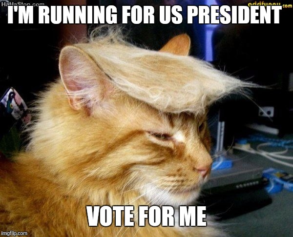 donald trump cat |  I'M RUNNING FOR US PRESIDENT; VOTE FOR ME | image tagged in donald trump cat | made w/ Imgflip meme maker