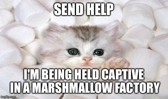 SEND HELP I'M BEING HELD CAPTIVE IN A MARSHMALLOW FACTORY | made w/ Imgflip meme maker