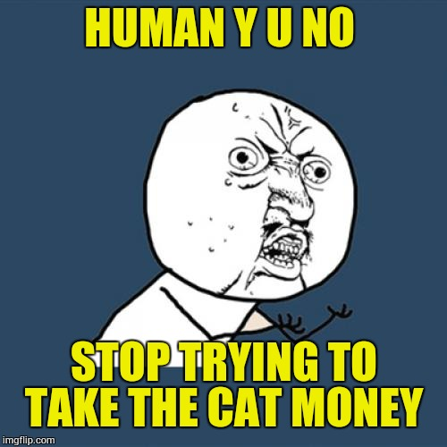 Y U No Meme | HUMAN Y U NO STOP TRYING TO TAKE THE CAT MONEY | image tagged in memes,y u no | made w/ Imgflip meme maker