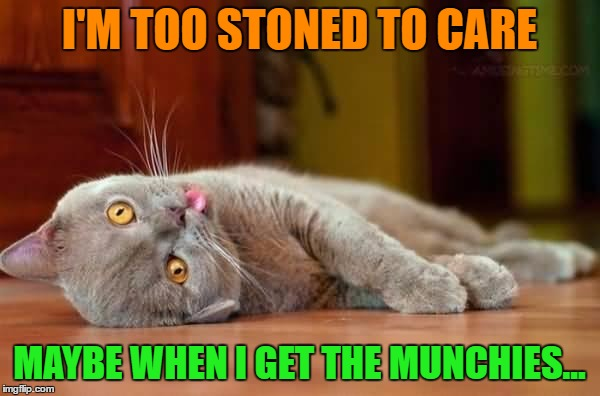 I'M TOO STONED TO CARE MAYBE WHEN I GET THE MUNCHIES... | made w/ Imgflip meme maker