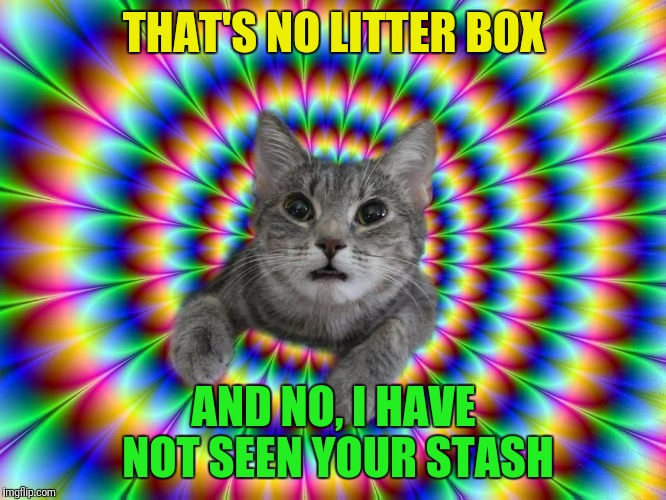 THAT'S NO LITTER BOX AND NO, I HAVE NOT SEEN YOUR STASH | made w/ Imgflip meme maker