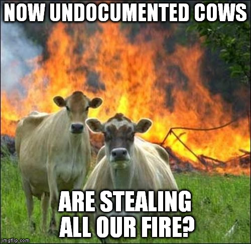 NOW UNDOCUMENTED COWS ARE STEALING ALL OUR FIRE? | made w/ Imgflip meme maker