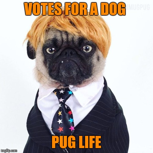 Pug Life | VOTES FOR A DOG PUG LIFE | image tagged in memes,thug life,pugs,pug life,election 2016 | made w/ Imgflip meme maker