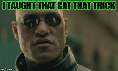 Matrix Morpheus Meme | I TAUGHT THAT CAT THAT TRICK | image tagged in memes,matrix morpheus | made w/ Imgflip meme maker