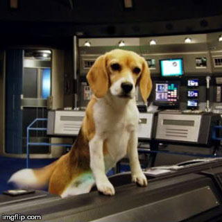 Captain Archer's Beagle Porthos | . | image tagged in captain archer's beagle porthos | made w/ Imgflip meme maker