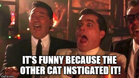 Goodfellas Laughing | IT'S FUNNY BECAUSE THE OTHER CAT INSTIGATED IT! | image tagged in goodfellas laughing | made w/ Imgflip meme maker