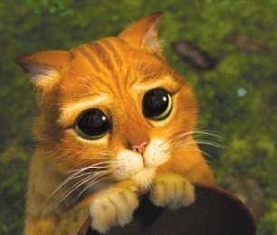 Sad Puppy Eyes Cat Blank Template - Imgflip