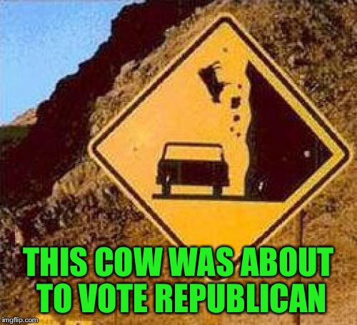 Another Hillary Victim |  THIS COW WAS ABOUT TO VOTE REPUBLICAN | image tagged in falling cows,memes | made w/ Imgflip meme maker