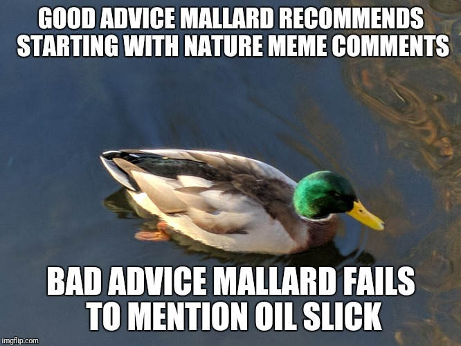 GOOD ADVICE MALLARD RECOMMENDS STARTING WITH NATURE MEME COMMENTS BAD ADVICE MALLARD FAILS TO MENTION OIL SLICK | made w/ Imgflip meme maker