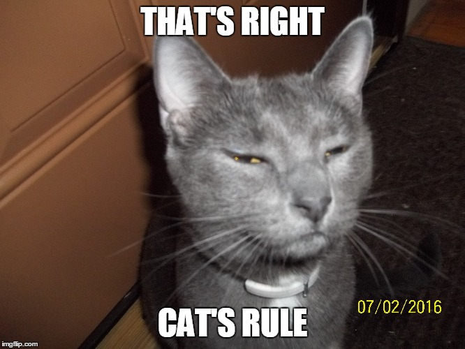 THAT'S RIGHT CAT'S RULE | made w/ Imgflip meme maker